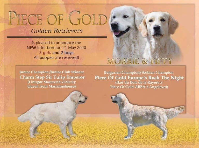 Ново кучило от развъдник Piece Of Gold
